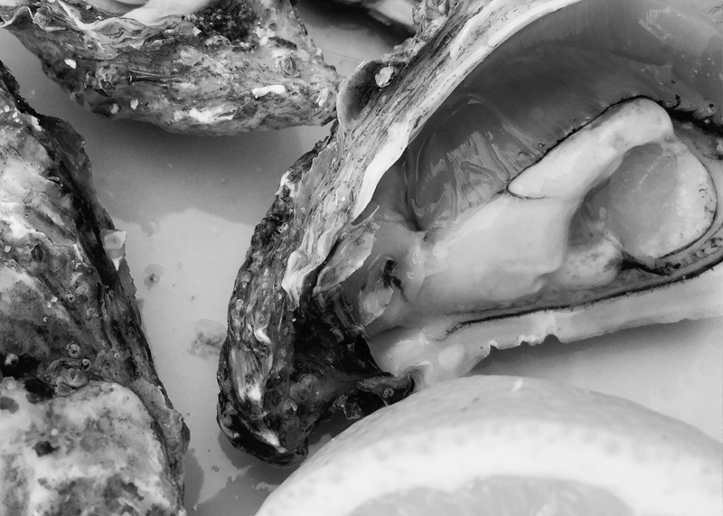 oysterpics
